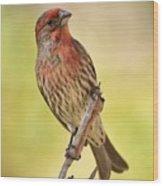 Rosy Finch Macro Wood Print