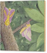 Rosy Maple Moth Gathering Wood Print
