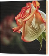 Rosy Red Reflections Wood Print