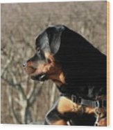 Rottie Profile Wood Print