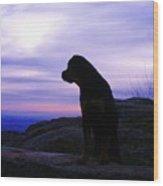 Rottweiler Sunrise 1 Wood Print