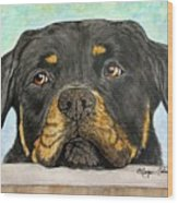 Rottweiler's Sweet Face 2 Wood Print by Megan Cohen