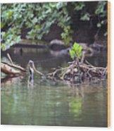 Roubidox Creek Wood Print