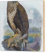 Rough Legged Buzzard Hawk Antique Bird Print The Birds Of Great Britain Wood Print
