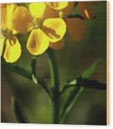 Rough Wallflower  -  60618-122 Wood Print