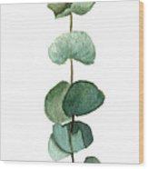 Round Leaf Eucalyptus Twig Wood Print