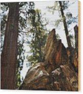 Round Meadow Giant Sequoia Wood Print
