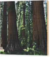 Round Meadow Sequoia Family Portrait Wood Print