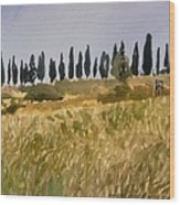 Row Of Cypress Trees, Tuscany Wood Print