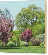 Row Of Flowering Trees Wood Print