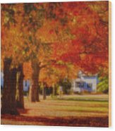 Row Of Maples Wood Print