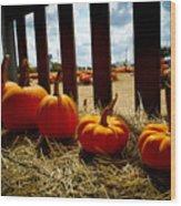 Row Of Pumpkins Sitting Wood Print
