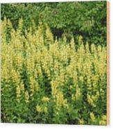 Row Of Yellow Flowers Wood Print