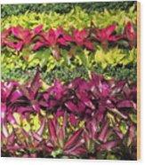Rows Of Bromeliads Wood Print