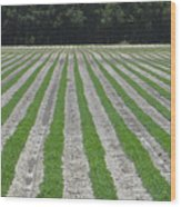 Rows Of Crops Wood Print