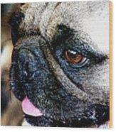Roxy The Pug Wood Print