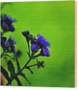 Royal Blue In A Sea Of Green Wood Print