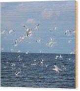 Royal Blue Ocean Tern Wood Print