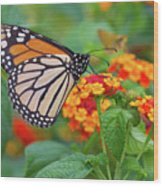 Royal Butterfly Wood Print