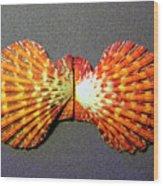 Royal Cloak Scallop Seashell  Wood Print