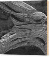Royal Deadwood Study 2 Wood Print