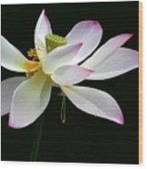 Royal Lotus Wood Print