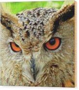 Royal Owl Wood Print