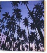 Royal Palm Grove Wood Print