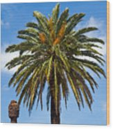 Royal Palm In Florida Wood Print