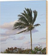 Royal Palm Tree Wood Print