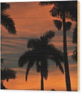 Royal Palms Wood Print