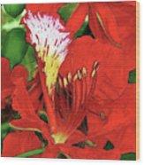 Royal Poinciana Wood Print