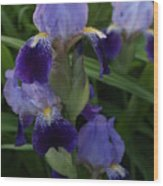 Royal Purple Iris's Wood Print