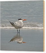 Royal Tern Reflection Wood Print