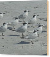 Royal Terns #3 Wood Print