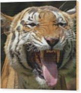 Royal Tiger Wood Print