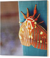 Royal Walnut Moth Wood Print