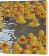 Rubber Duckies Wood Print