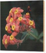 Rubiaceae Wood Print