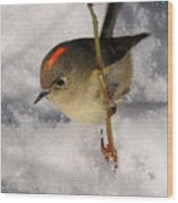 Ruby-crowned Kinglet Wood Print