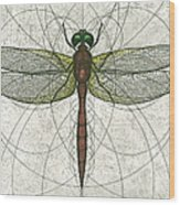 Ruby Meadowhawk Dragonfly Wood Print by Charles Harden