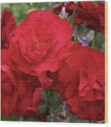 Ruby Red Wood Print