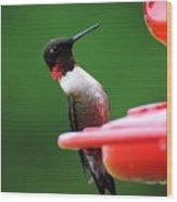 Ruby Red Throated Hummingbird On Feeder Wood Print