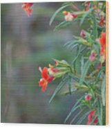 Ruby Throated Flowers Wood Print