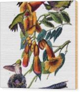 Ruby Throated Humming Bird Audubon Birds Of America 1st Edition 1840 Octavo Plate 253 Wood Print
