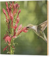 Ruby Throated Hummingbird 2-2015 Wood Print