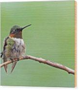 Ruby-throated Hummingbird #2 Wood Print