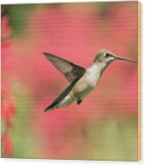 Ruby Throated Hummingbird 2016-6 Wood Print