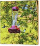 Ruby-throated Hummingbird 3 Wood Print