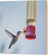 Ruby-throated Hummingbird 4 Wood Print